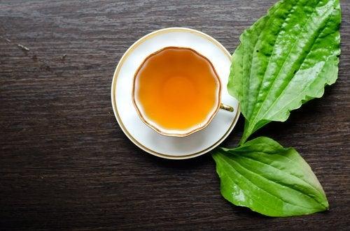 le thé à la menthe pour brûler les graisses
