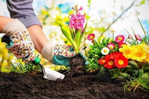 5 belles idées pour créer un mini jardin chez vous