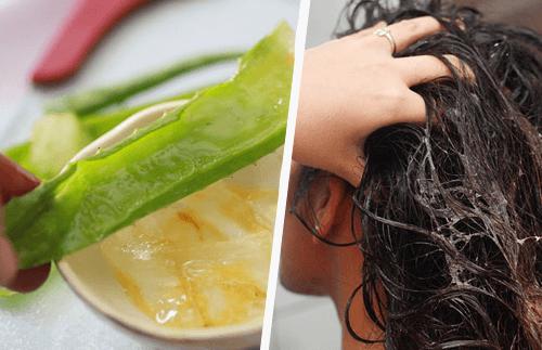 aloe vera, remède naturel pour le traitement de l'alopécie