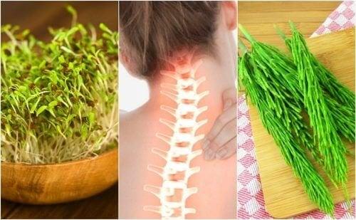 7 plantes médicinales qui vous aident à prendre soin de votre santé osseuse