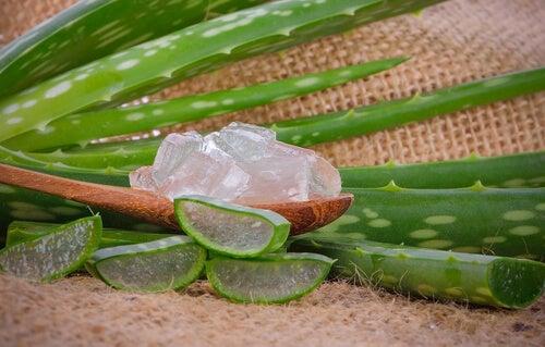 le mélange gel d'aloe vera, miel et citron est un antibiotique naturel