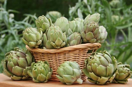 les artichauts pour diminuer les niveaux d'acide urique