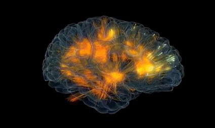 cerveau langage