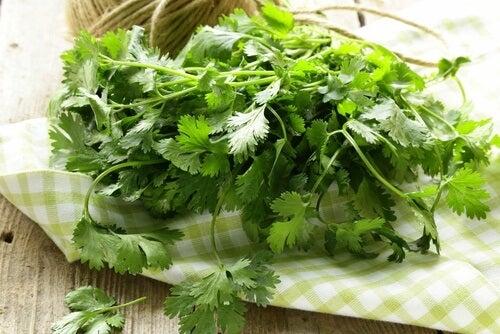 la coriandre est une épice qui aide à éliminer les toxines