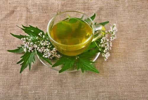 5 herbes médicinales pour traiter la dépression