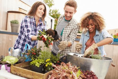 comment réaliser un mini jardin chez vous
