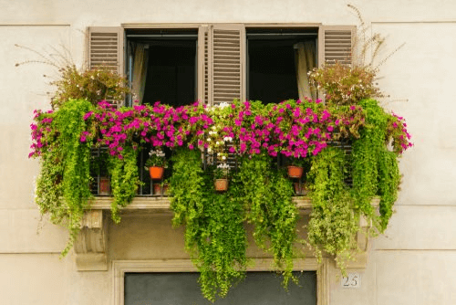 un mini jardin chez vous