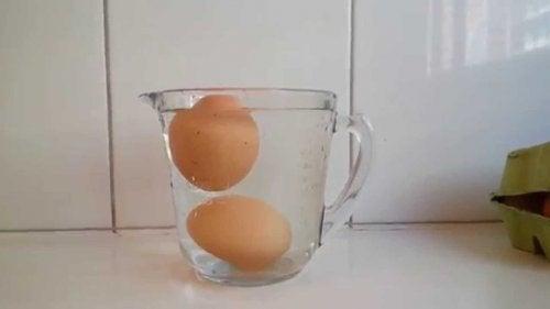 Plongez les œufs dans l'eau pour savoir s'ils sont comestibles.