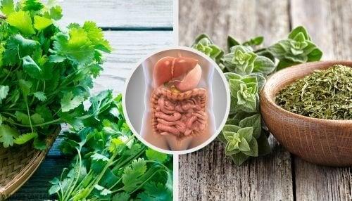 5 infusions aux herbes pour désintoxiquer le système digestif