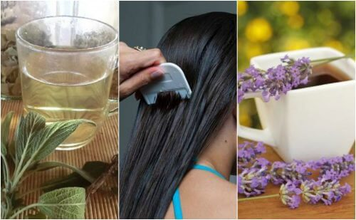 5 remèdes à base de plantes pour combattre naturellement les poux et les lentes