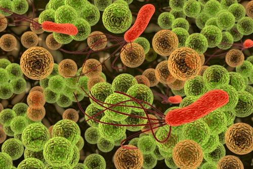 Les 9 bactéries les plus dangereuses pour l'être humain