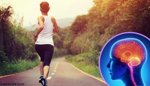 Lorsque nous cessons de faire du sport, notre cerveau change