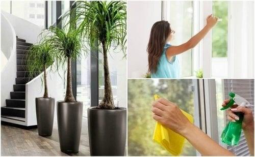 6 choses à faire pour améliorer la qualité de l'air de votre maison
