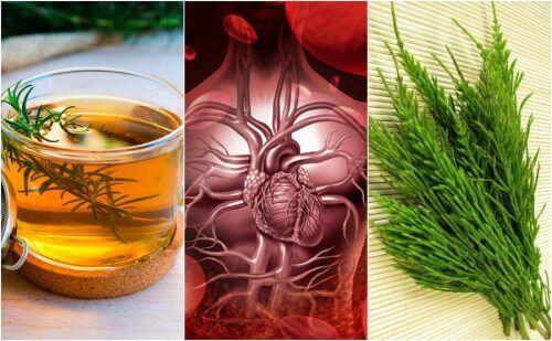 Comment améliorer la circulation sanguine avec 5 remèdes à base de plantes