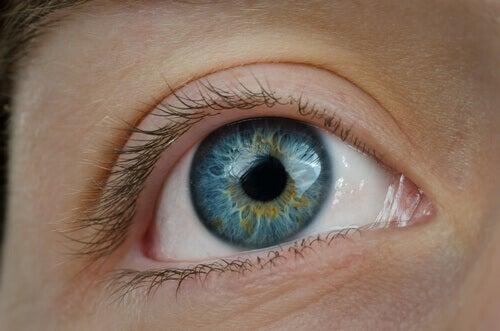 Le pissenlit pour la santé oculaire.