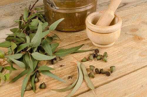 Infusion d'eucalyptus pour traiter les allergies