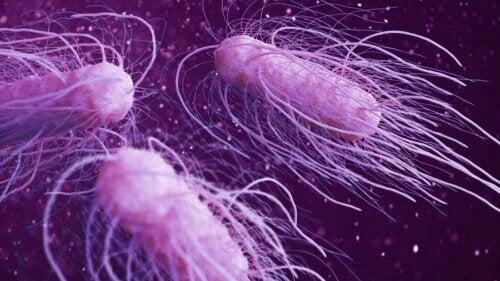 Les 9 bactéries dangereuses les plus nocives pour l'être humain