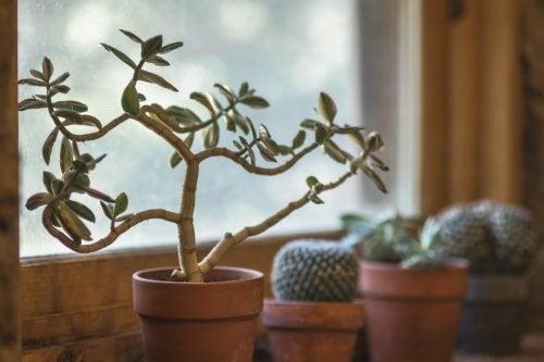 7 raisons pour lesquelles vous devriez avoir des plantes chez vous