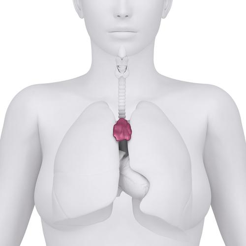 changement du thymus