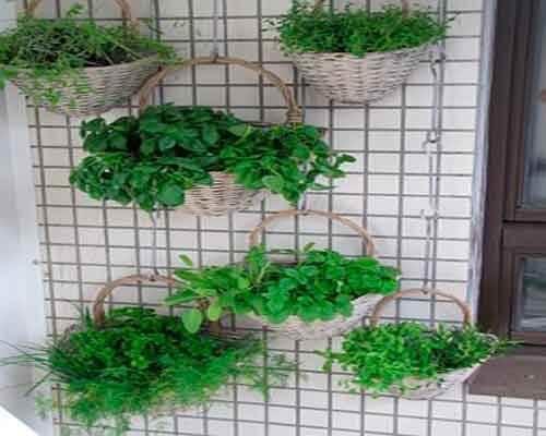 créer un jardin suspendu