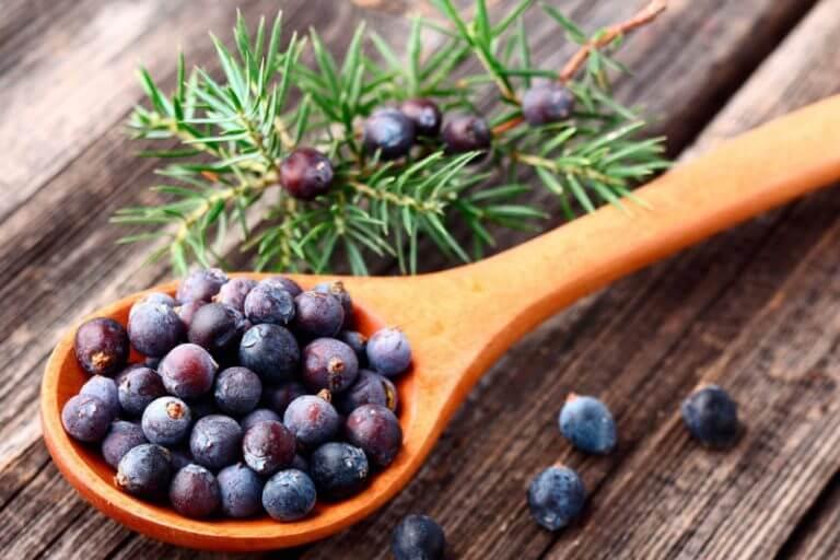 Le genièvre : herbe bonne pour la santé alliée de votre perte de poids