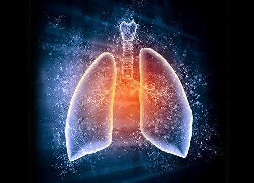 Image de poumons