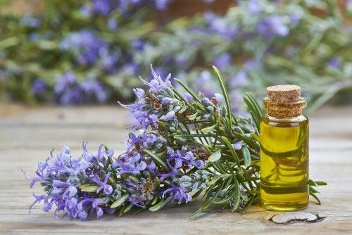 préparer une huile raffermissante au romarin pour raffermir les jambes
