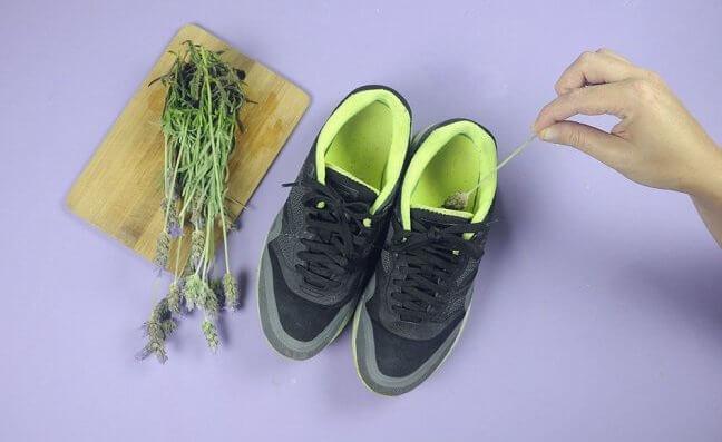éliminer les mauvaises odeurs des chaussures grâce à la lavande