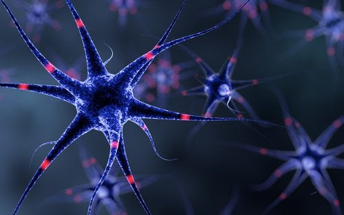 les lentilles protègent le système nerveux