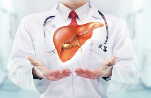 médecin et illustration d'une partie du corps humain