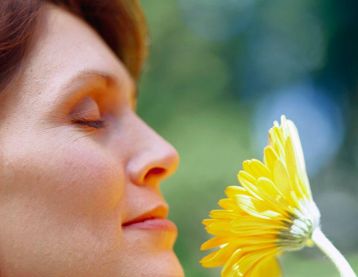 les plantes génèrent du bonheur
