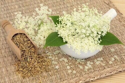 Remèdes naturels efficaces pour soigner les maux de tête : reine des prés