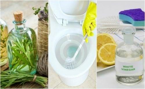 5 solutions écologiques pour désinfecter votre salle de bains