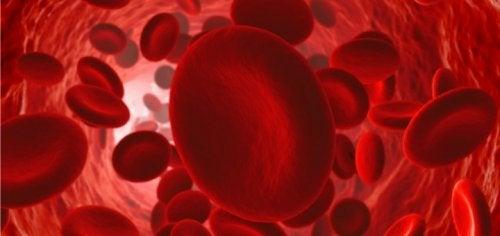 Comment maintenir un bon flux sanguin ?