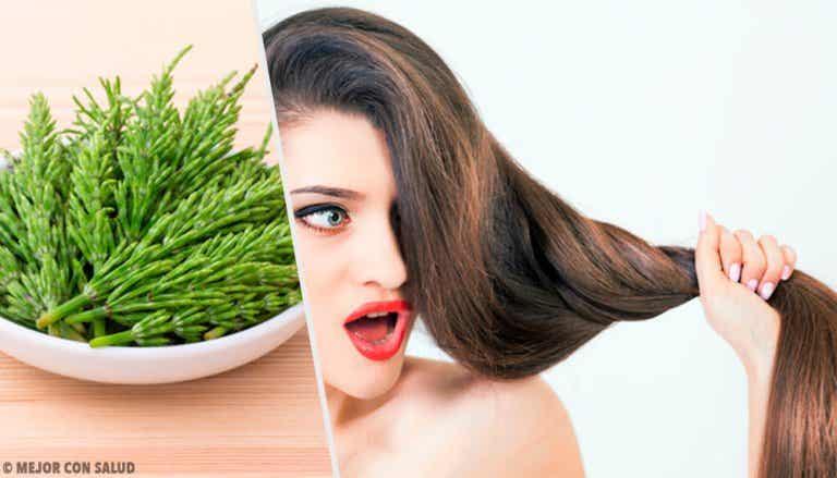 Faites pousser vos cheveux avec la prêle des champs