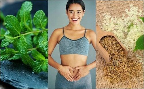 6 plantes médicinales pour prendre soin de votre digestion