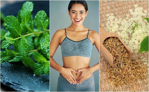 Prenez soin de votre digestion avec ces 6 plantes médicinales