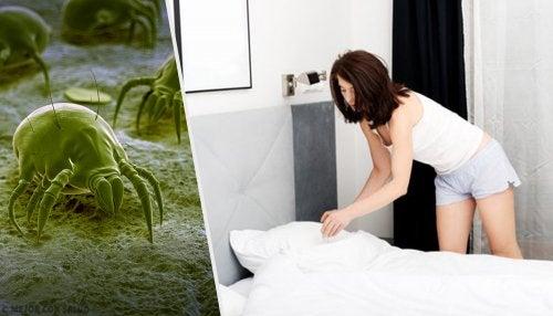 7 conseils pour lutter contre les acariens à la maison