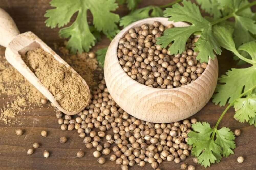 les graines de coriandre en cas de règles abondantes
