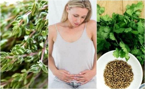 6 herbes carminatives pour se débarrasser des gaz intestinaux