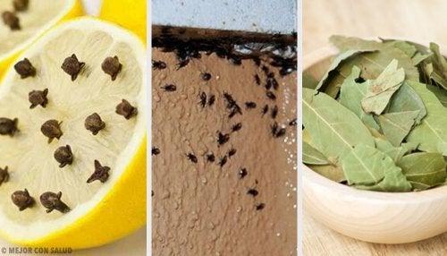 Comment éliminer les insectes de manière naturelle
