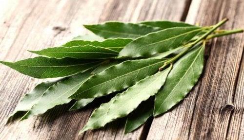 l'eucalyptus pour chasser les insectes