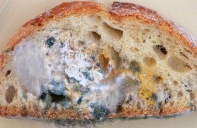 Le pain frais en cuisine.