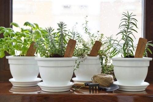 Créez votre propre jardin de plantes aromatiques
