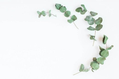 L'eucalyptus pour renforcer vos poumons et mieux respirer