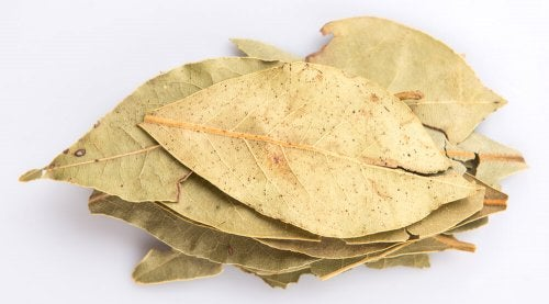 les feuilles de laurier pour renforcer les poumons et mieux respirer