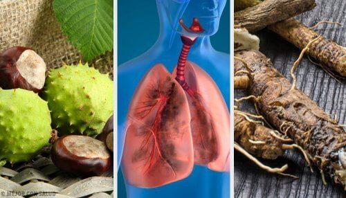 4 remèdes maison pour renforcer vos poumons et mieux respirer