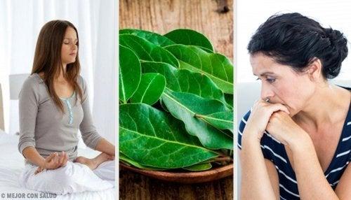7 propriétés inconnues des feuilles de laurier