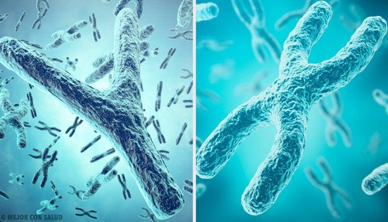 Origine génétique du sexe : les chromosomes sexuels X et Y