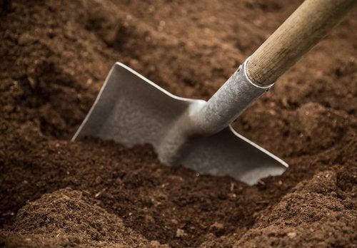 Sol sableux pour les plantes aromatiques.